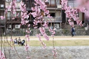 2016年-桜