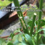 「香川照之の昆虫すごいぜ!」をやっと見た!面白い!着ぐるみを着て何時間も走りまわって虫を探し熱く語るのがいい