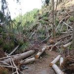 川久保からポンポン山へのハイキングコース2018年8月の台風の影響で今だ倒木多数で通行止